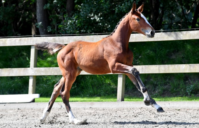 Pallester (grandmother give 3 1.60m horses)